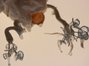 Margaret Craig - Latte Topper Anenome detail