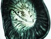 Close up of bio flower