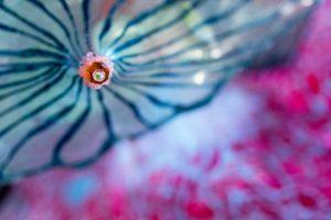 Flower - Great Trash Reef